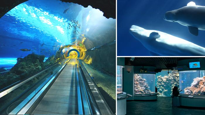 珊瑚王國館場景圖