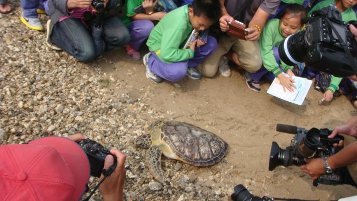 海龜野放2
