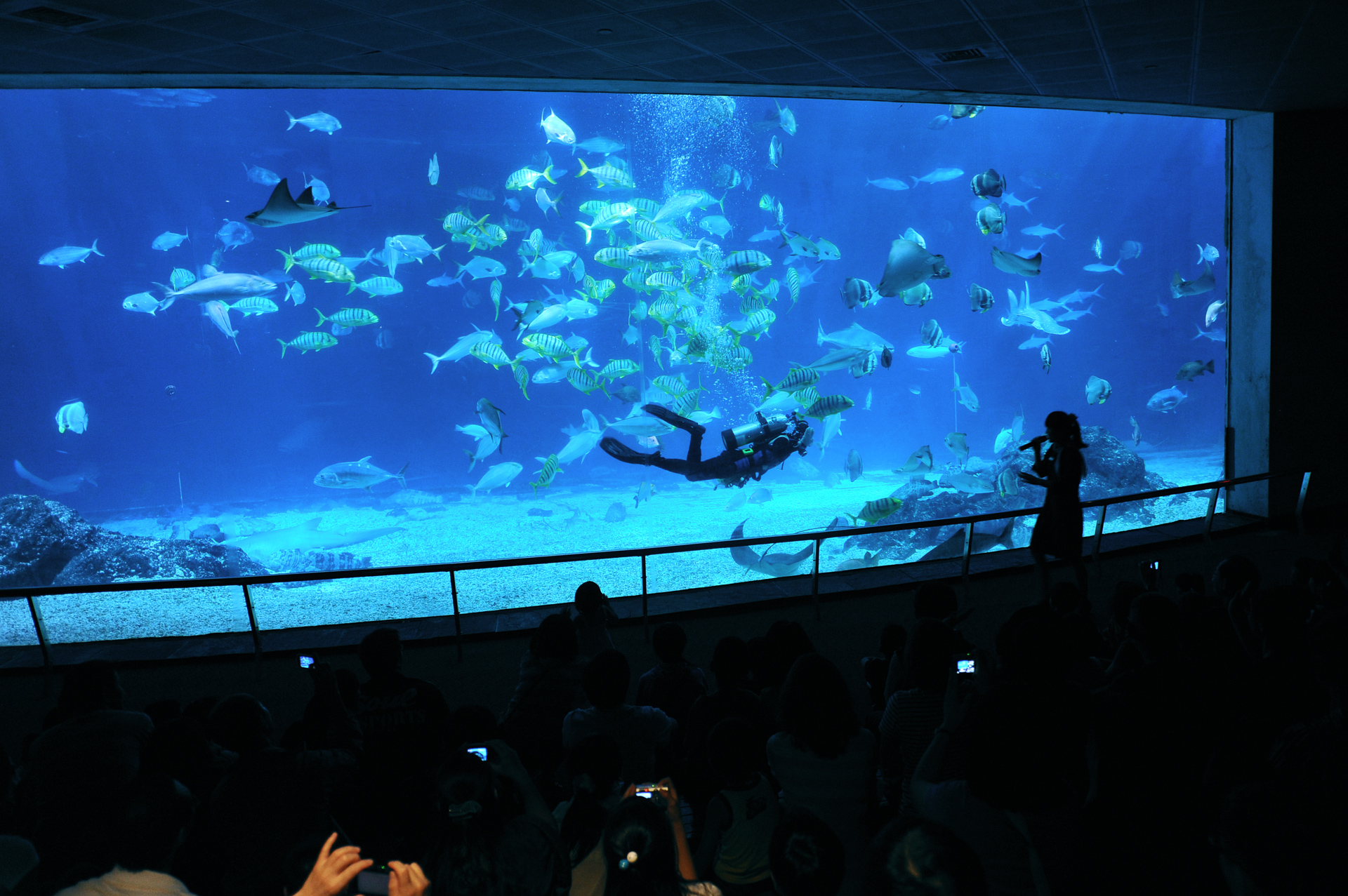 Open Ocean Tank Fish Feeding Show