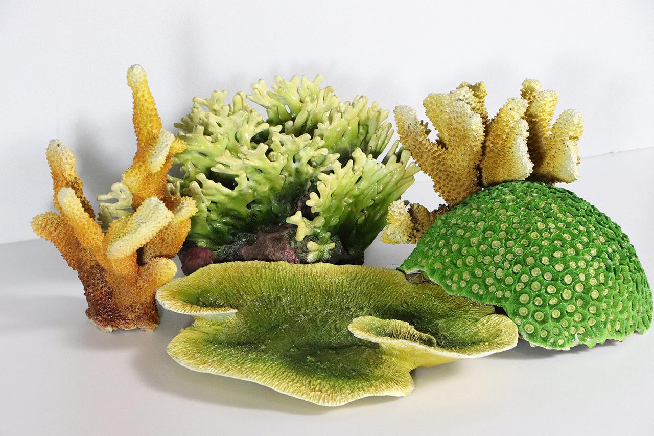 驚艷奇珍珊瑚行動展示箱