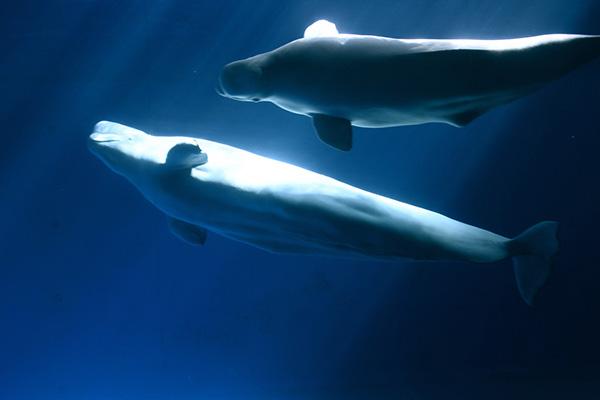 探索海哺類展區照片