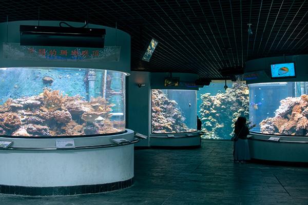 珊瑚礁預覽區照片