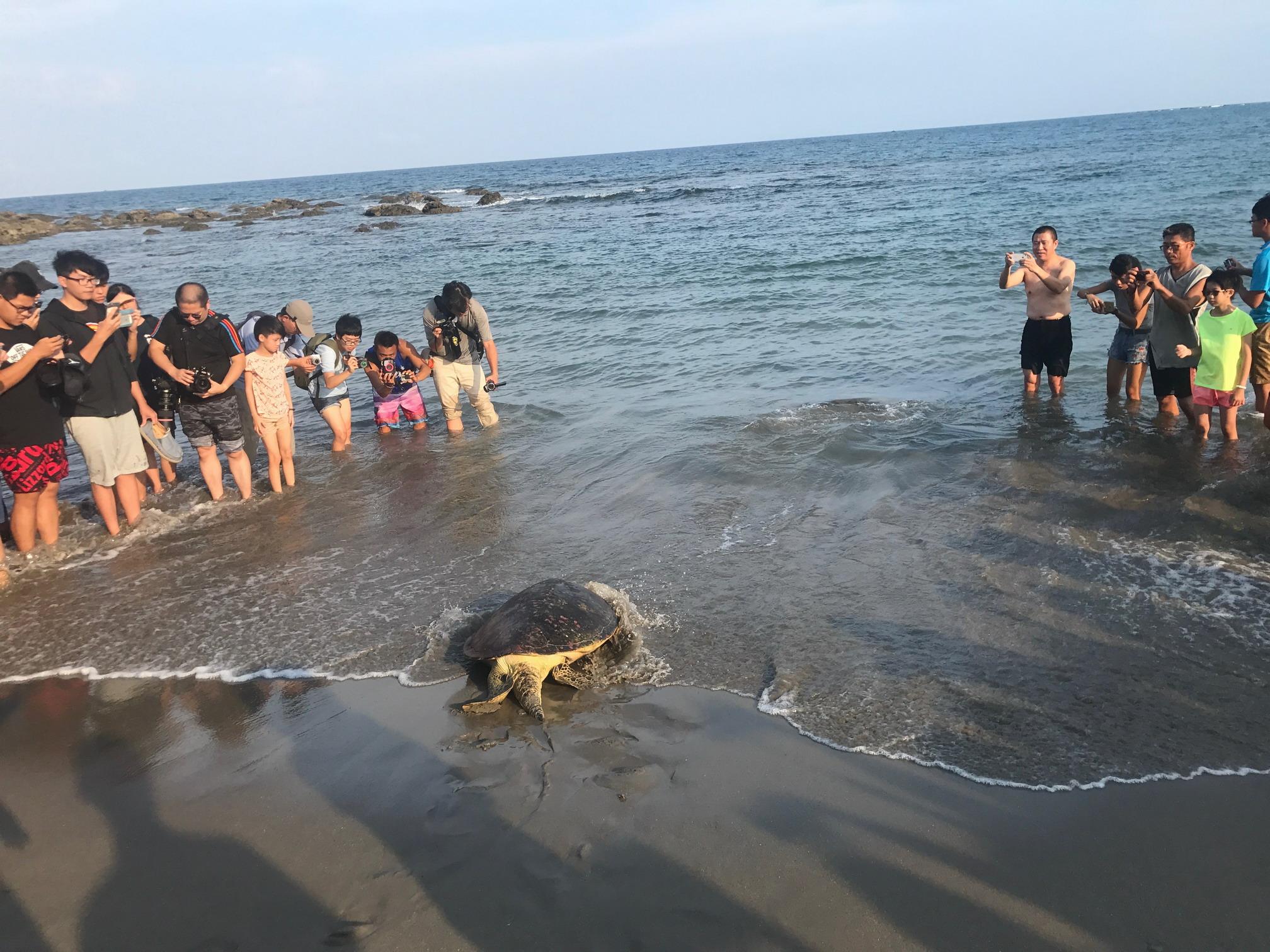 海龜返回大海