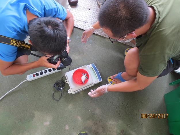 圖4-海龜體重記錄.JPG