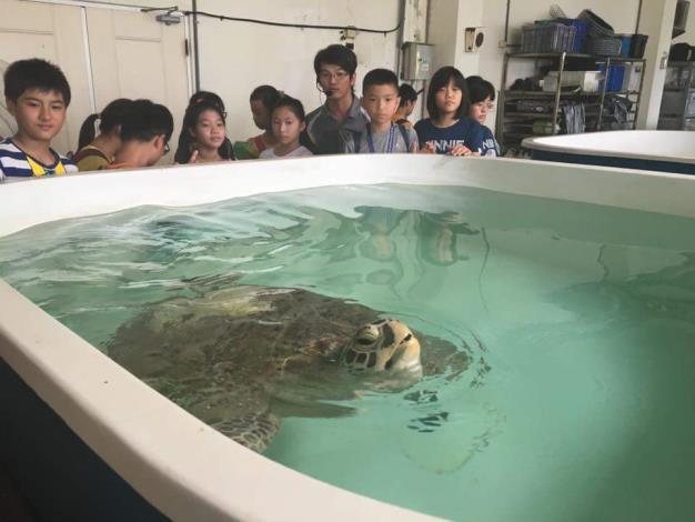 海洋教育中心參訪,可愛的海龜