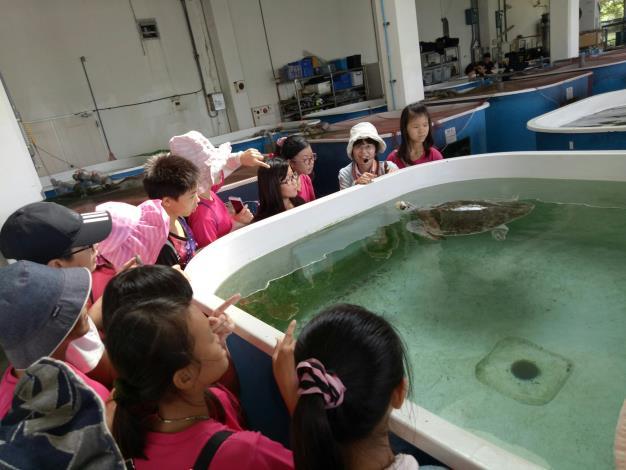 學生認真的觀察收容的海龜