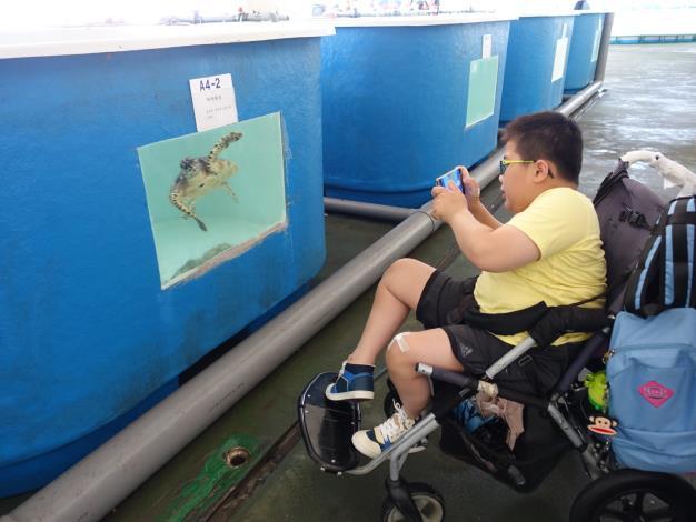 身障孩童近距離觀察海龜.JPG