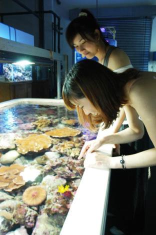 珊瑚水桌參訪