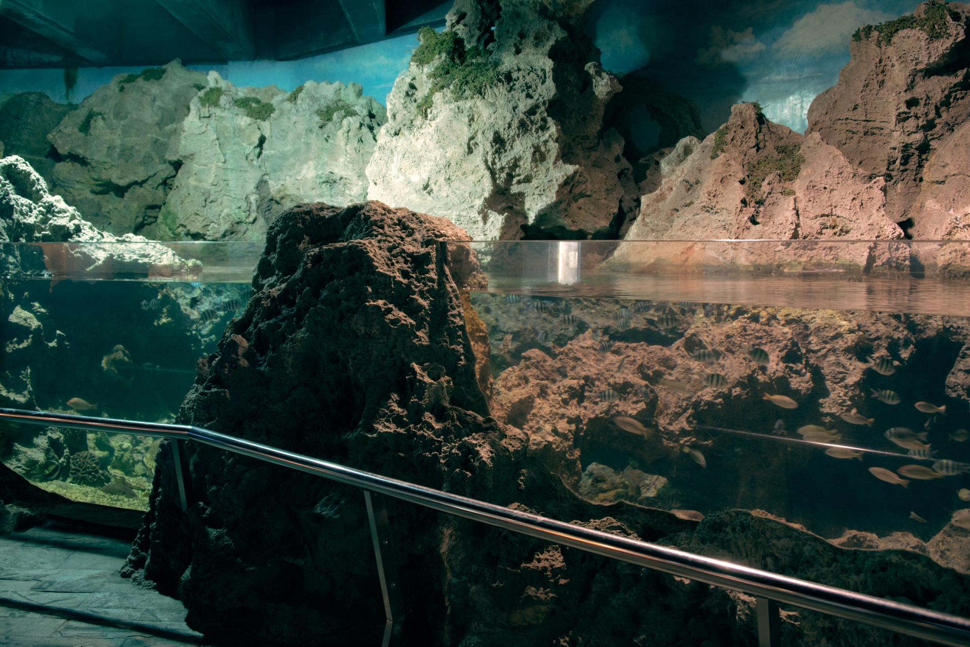 潮間帶展區照片