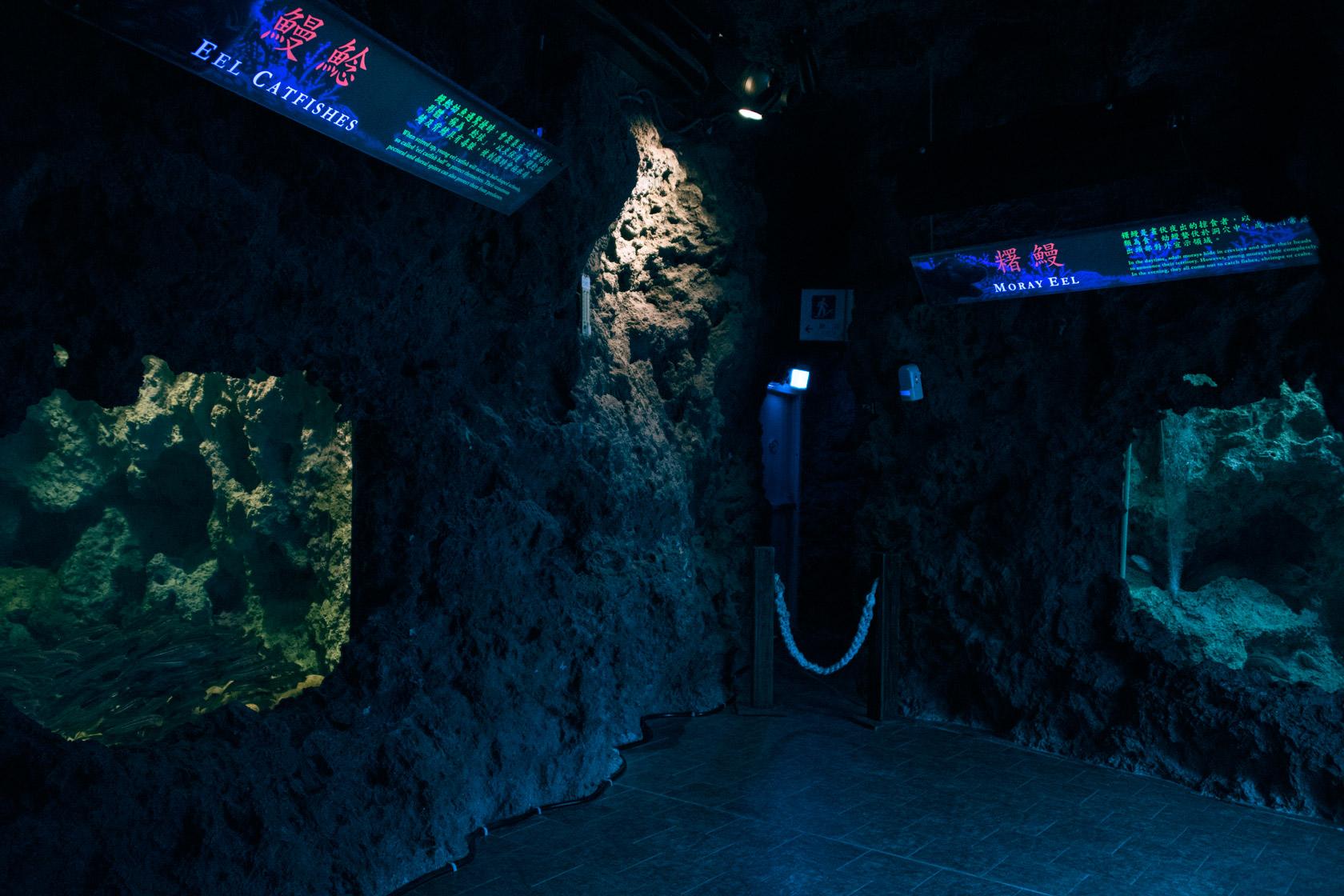 洞穴生物展區照片