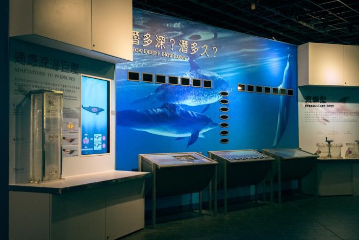 探索海哺類展區一隅