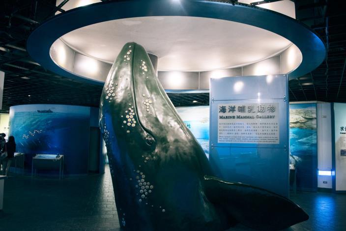 探索海哺類