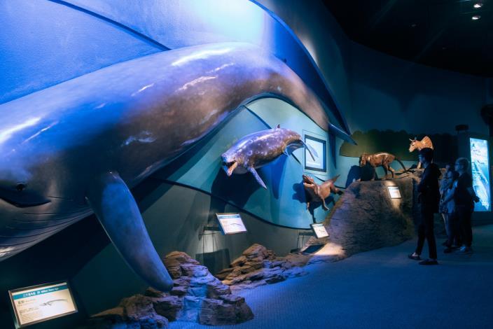 重返海洋的哺乳類