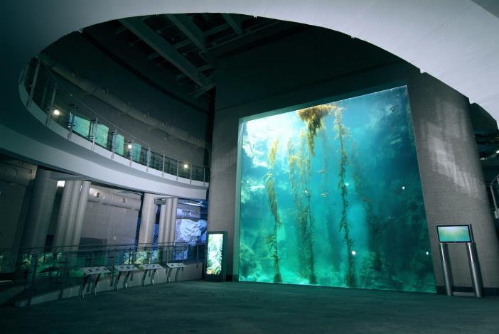 巨藻缸全景