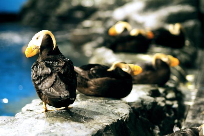 海鸚鵡水箱
