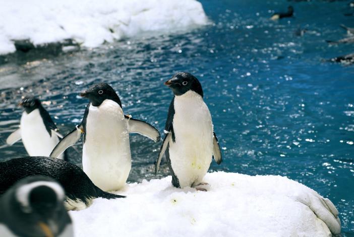 企鵝水箱另一景