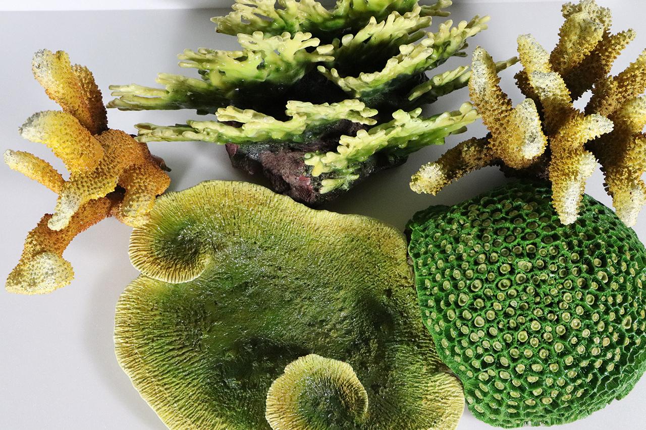 珊瑚模型3