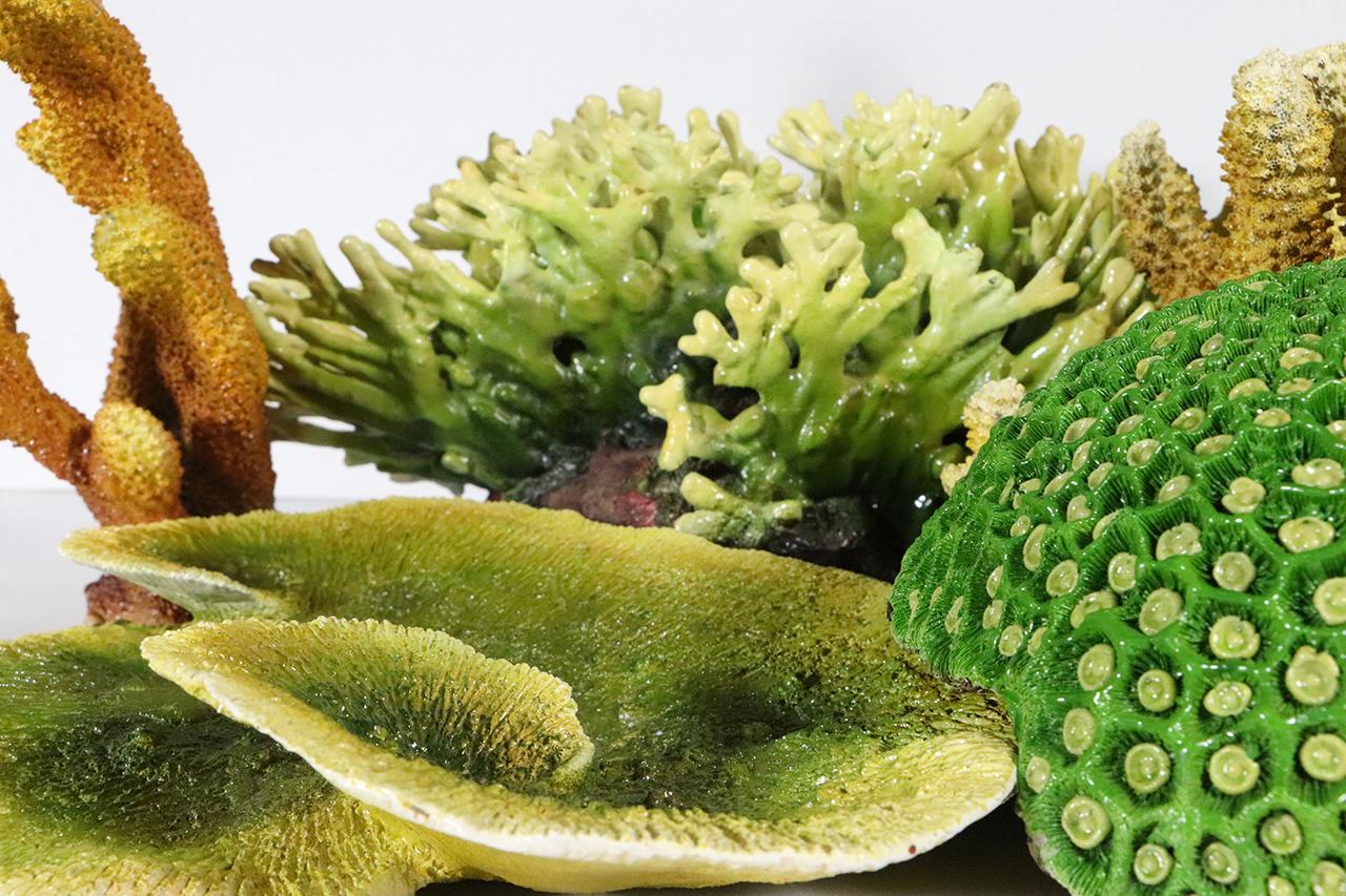 珊瑚模型2
