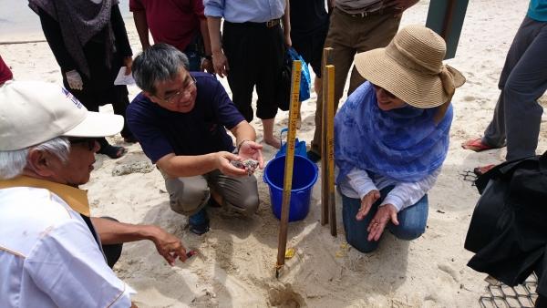 熱浪島的海龜研究設施參訪