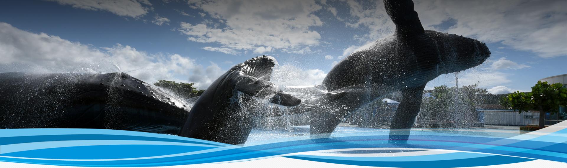 可能是最後一次? 日船出發前往南極海「科研」捕鯨