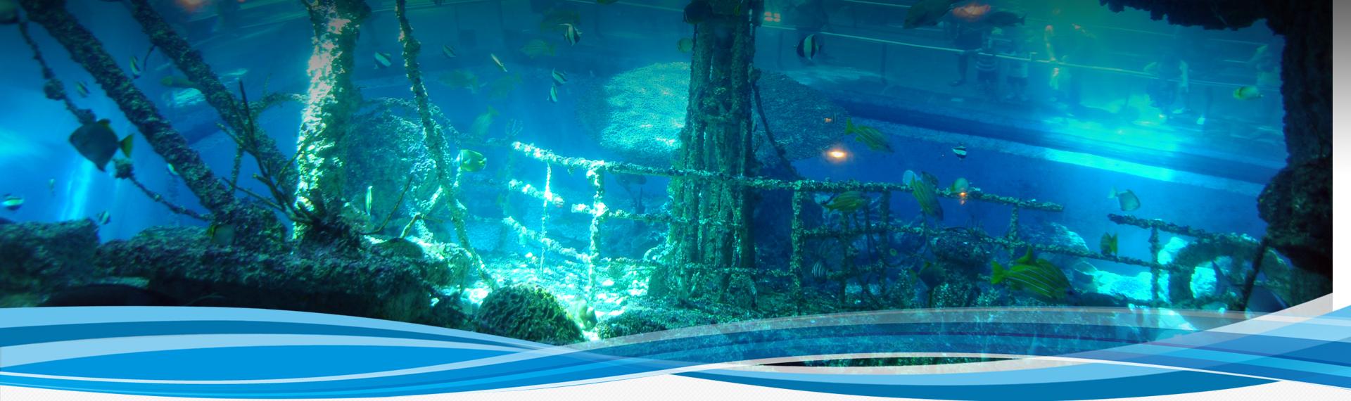 國立海洋生物博物館-展區內容介紹