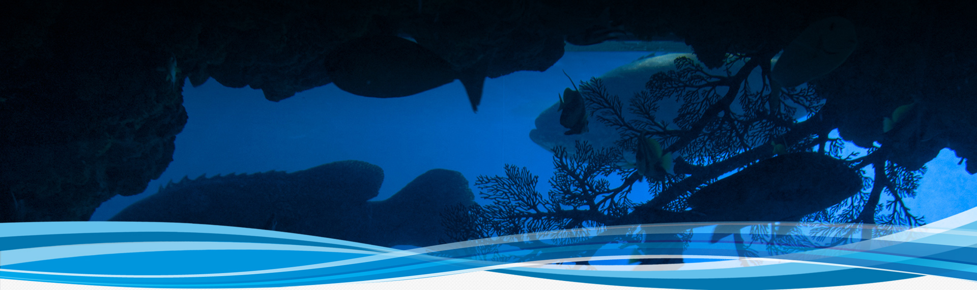 發現・貝魯卡 白鯨展覽