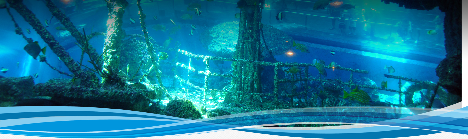 國立海洋生物博物館-珊瑚王國館