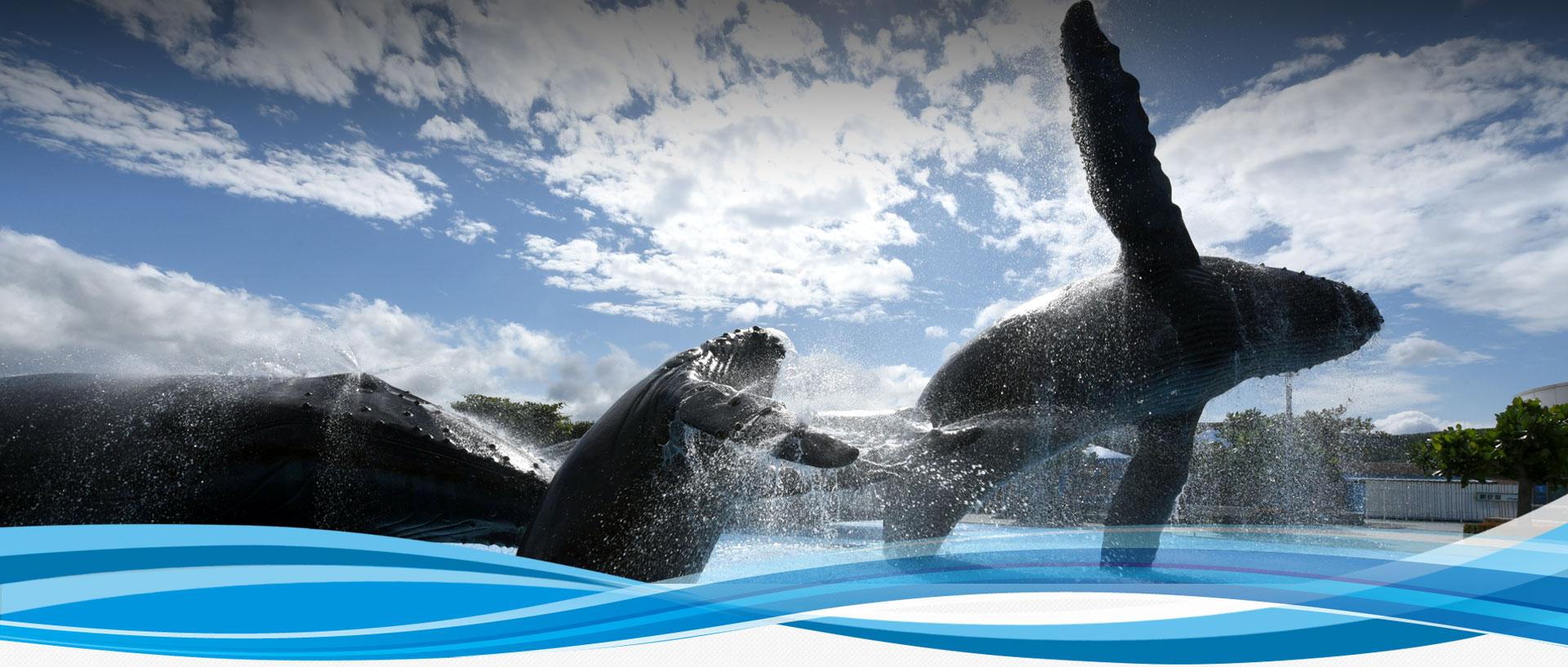 國立海洋生物博物館-網站導覽