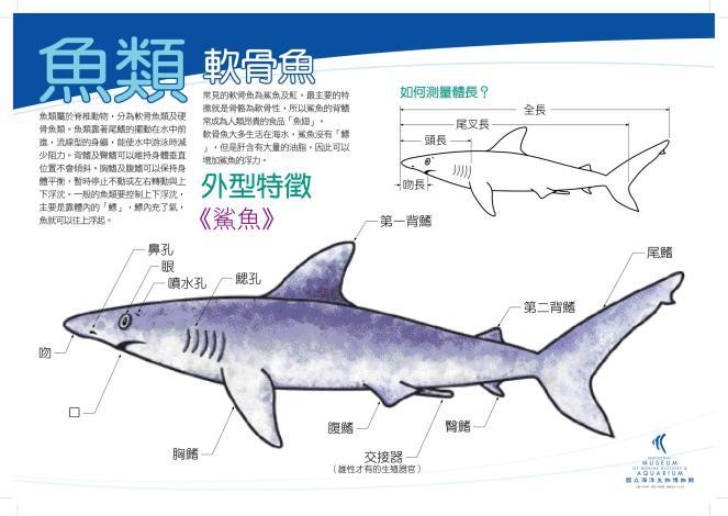 01魚軟骨_鯊魚