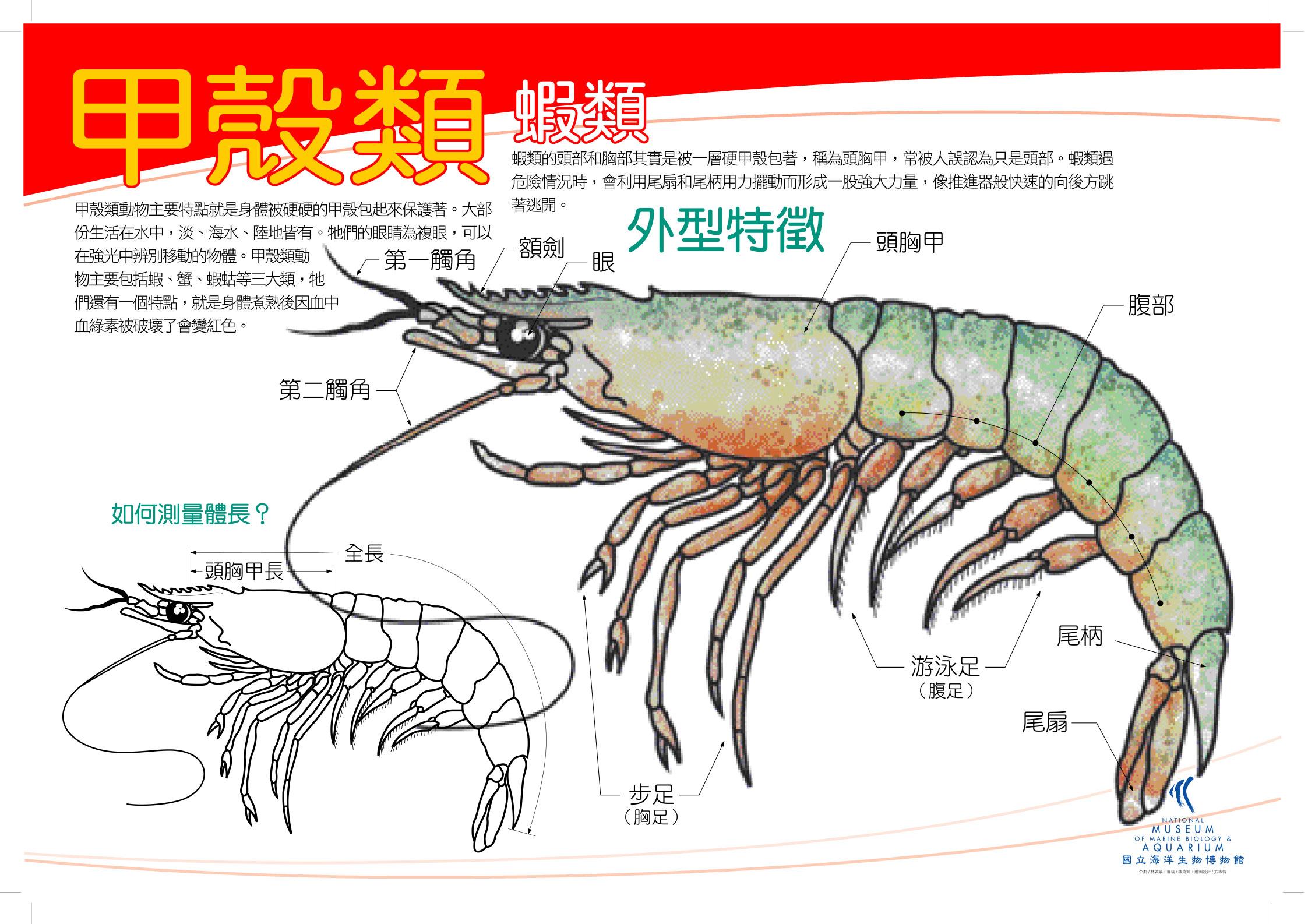 04甲殼_蝦