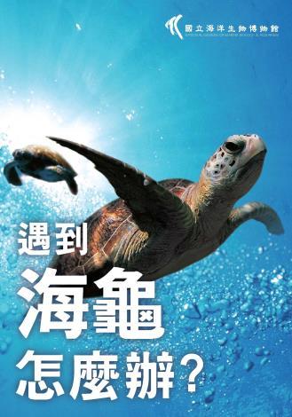 封面-遇到海龜怎麼辦1