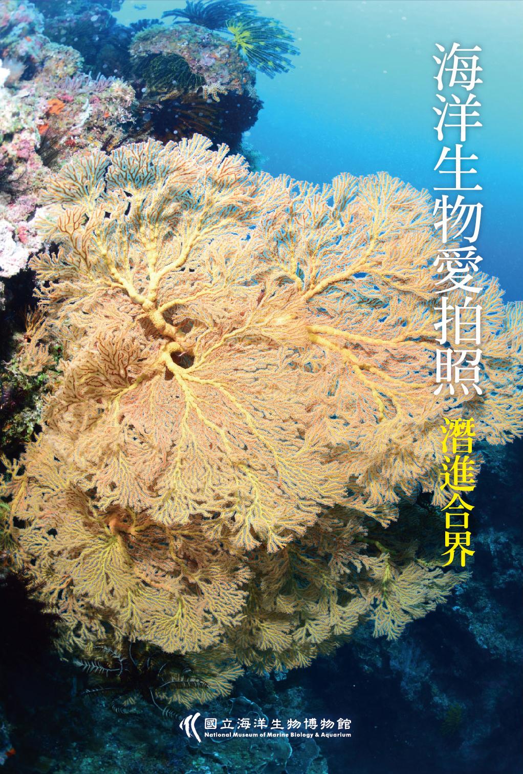 海洋生物愛拍照-潛進合界