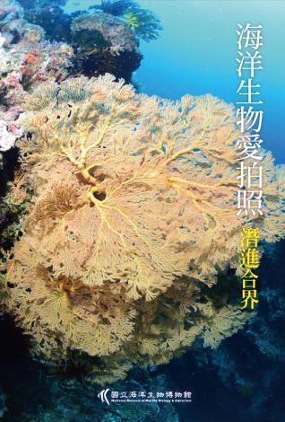 海洋生物愛拍照封面