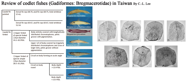 海洋生物多樣性