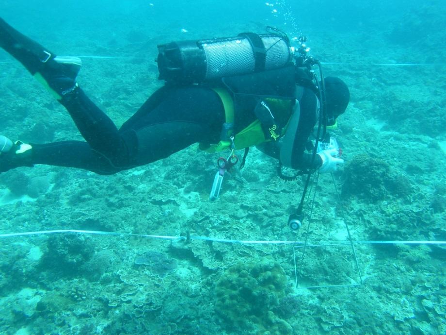 珊瑚礁生態保育與教育的整合研究發展