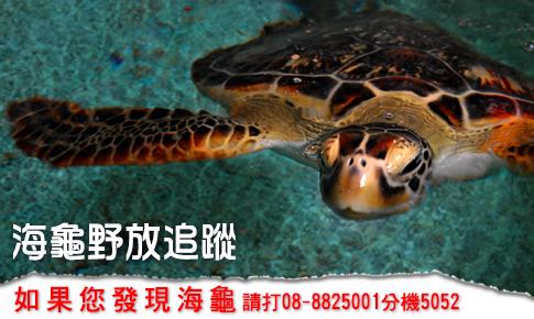 Find Turtle TEL:08-8825001#5052