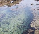 珊瑚礁海岸之潮間帶潮池 林淑婷攝