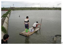 台西文蛤養殖池(徐崇斌 攝影)