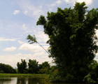 池塘中的天光雲影之美(桃園楊梅埤塘,郭美貞攝)