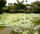 亭亭的荷花和優雅的睡蓮是人工池塘常見的觀賞植物(桃園楊梅埤塘,郭美貞攝)