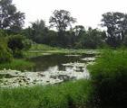 中港溪口人工濕地 (謝蕙蓮攝)