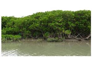 台北市淡水河流域竹圍附近紅樹林