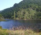 鴛鴦湖位於新竹、桃園、宜蘭三縣的交接接觸,百拔高約2000公尺,面積3.75公頃,由於富含高山生物,已被劃為自然保留區。(林淑婷 攝)