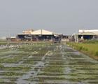 彰化福寶濕地休、廢耕的農田經過整地與引水等工作,營造適合鳥類棲息的環境