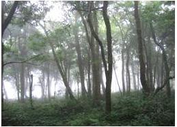 雙流的低海拔樟楠森林(邱慶耀 攝影)