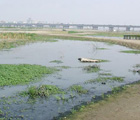 台北縣新海橋人工濕地 (王芳琳攝)