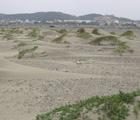 新竹沙丘地形 林柏芬攝