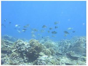 蘭嶼沿岸海域水下10米(溫國彰 攝影)