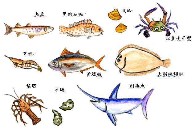 海洋中各種生物,作為人類食物的資源(邱翊盈 繪)