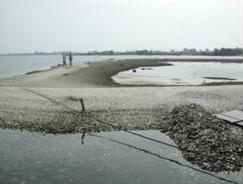 大鵬灣的蚵殼島景觀(林永銘 攝)